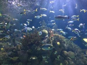 valencia oceanogràfic